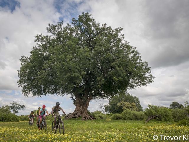 Mashatu Cycle Safaris