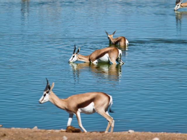 Exkursion in den Etosha Nationalpark