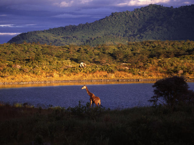 Day trips to Arusha National Park