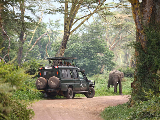 Game Drives (Included)