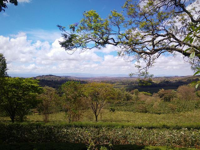 Farm Walks - Ngorongoro Forest Walk