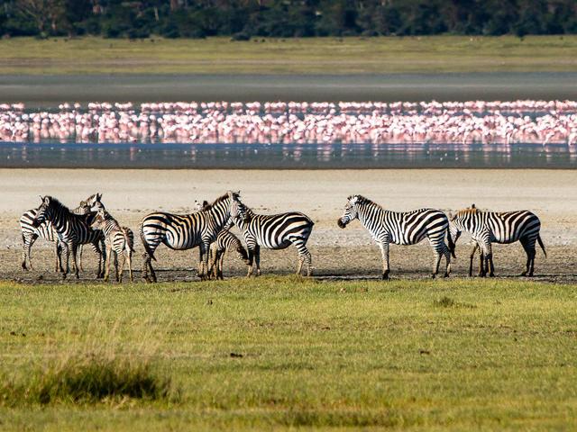 One day Ngorongoro Crater or Lake Manyara Safari