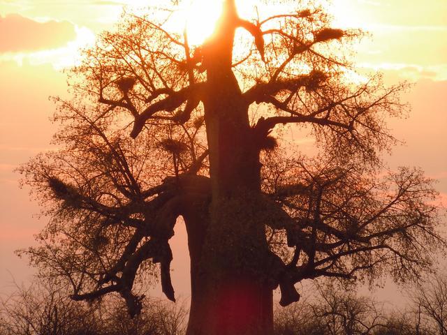 Planet Baobab Bushwalk