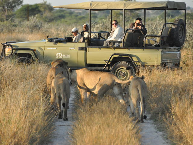 Game Drives - Day