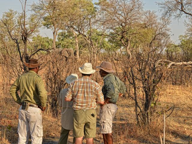 Wander-Safaris im Somalisa Camp