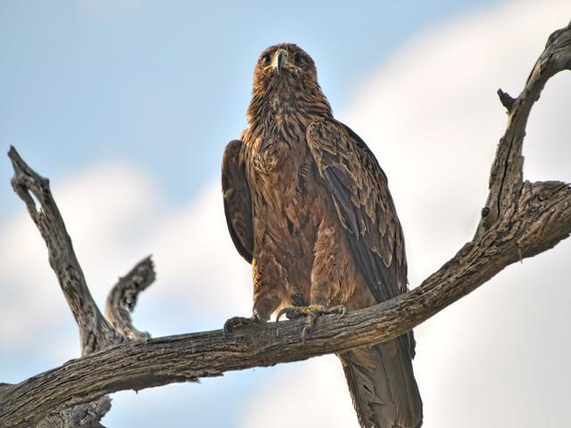 Vogelbeobachtungen im Somalisa Camp