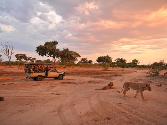 Pirschfahrten im Somalisa Camp