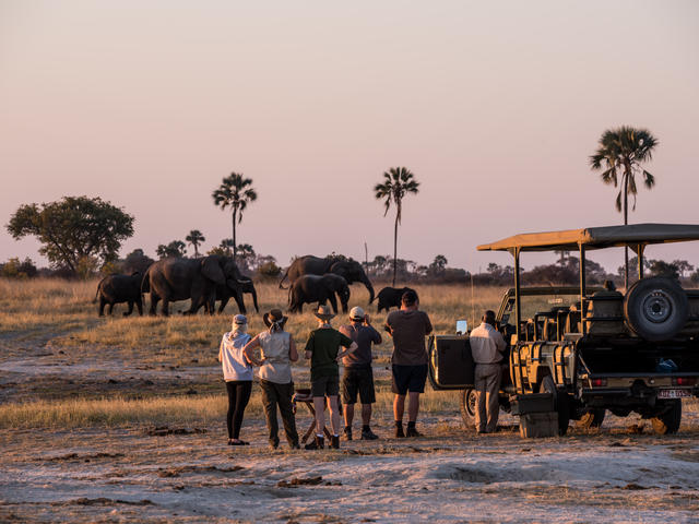 Day and Night Game Drives