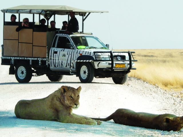 Halbtagstour in den Etosha Nationalpark