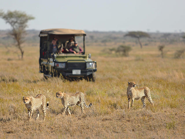 Cheetah Research Project