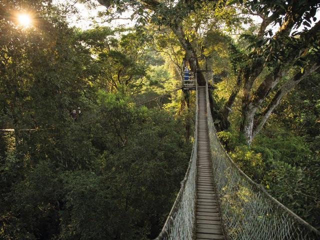 Inkaterra Canopy Tree House