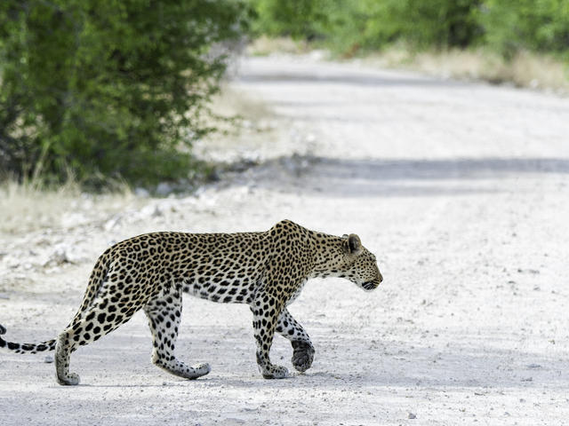 Etosha Game Drives