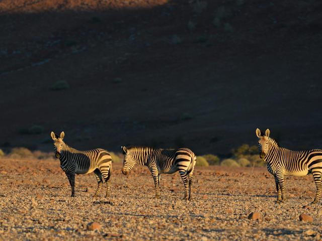 Desert Rhino Camp - Game Drives