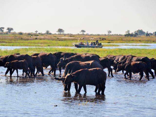 Full Day Excursion with Boat trip on Chobe and game drive