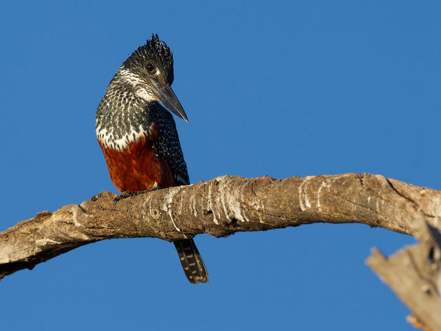Chobe Game Lodge Birding Experience