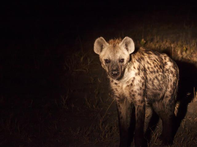 Moonlight Safaris