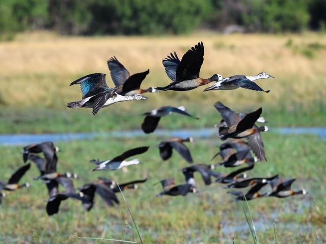 Savuti Camp - Birding