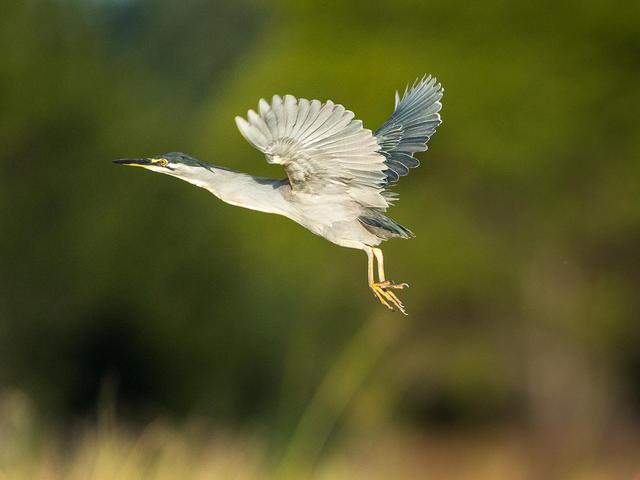 Ruckomechi Camp - Fantastic Birding