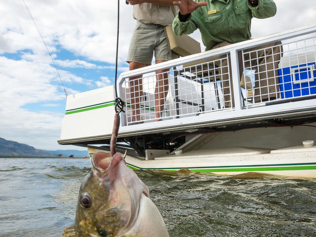 Ruckomechi Camp - Catch-and-release fishing*