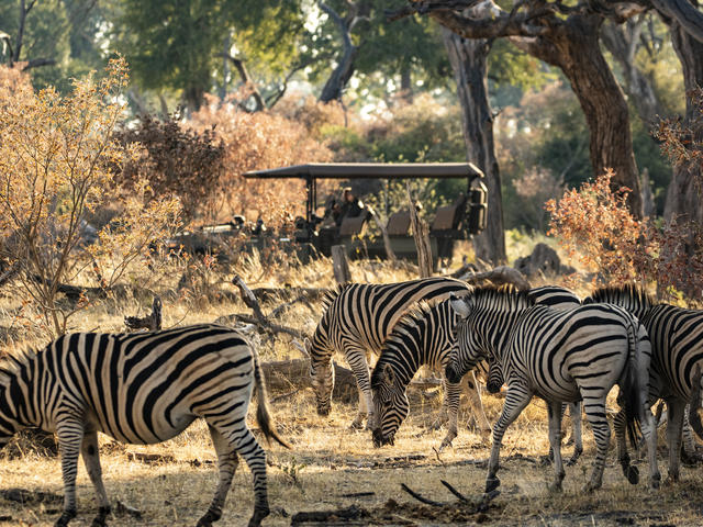 King's Pool - Game Drives