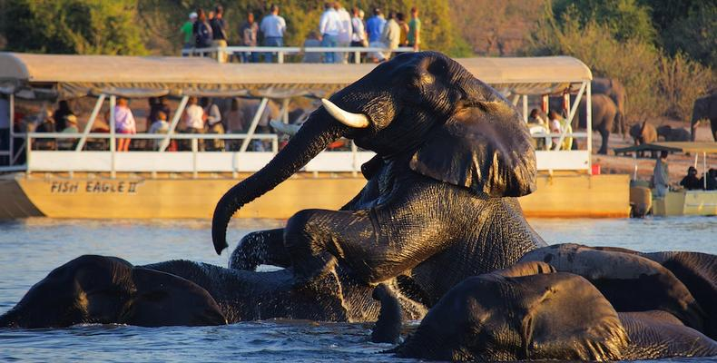 Boat Cruise on Chobe river