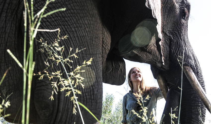 Observe the elephants' daily rituals and behaviour