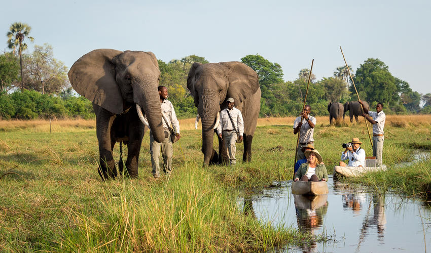 Mekoro boating with the Abu herd elephants