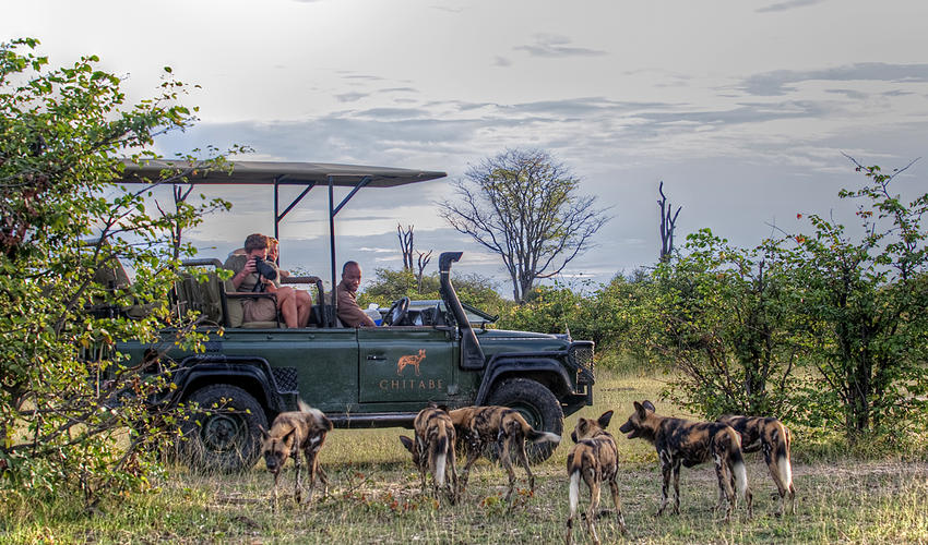 Wild Dogs seen on game drive