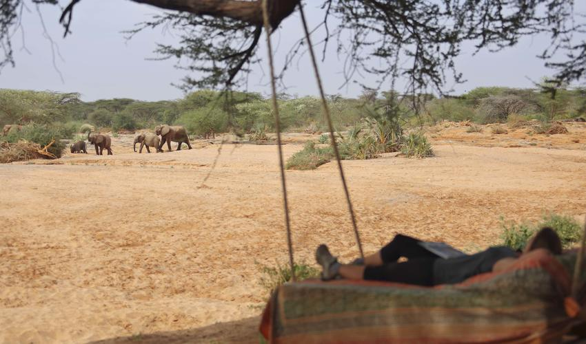 Relax in the tree bed at Banda 2 overlooking the waterhole visited daily by elephants