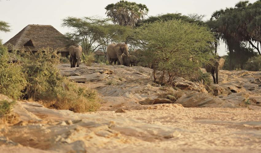 Check out how close you can get to elephants at the Waterhole from Banda 3 verandah