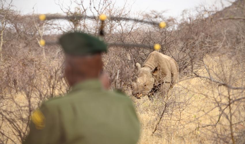 Sera Community Ranger with transmitter and Rhino
