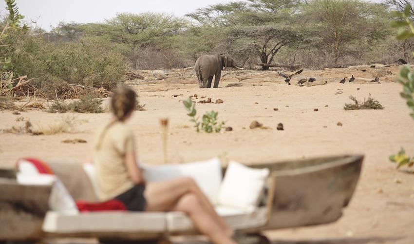 Wildlife big screen at Saruni Rhino