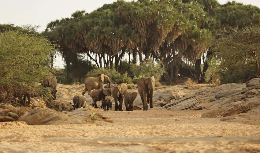 Bush TV doesn't get any better - daily waterhole visits by Sera ellies