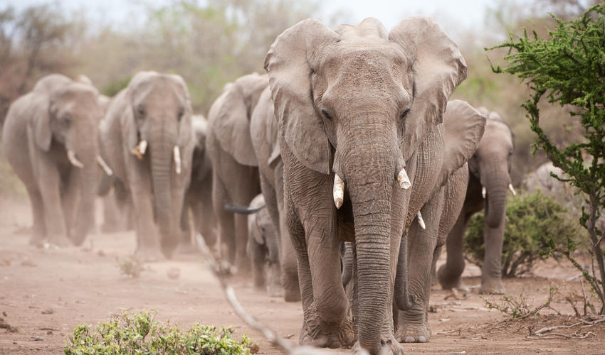Largest herds of elephant on privately owned land in Africa
