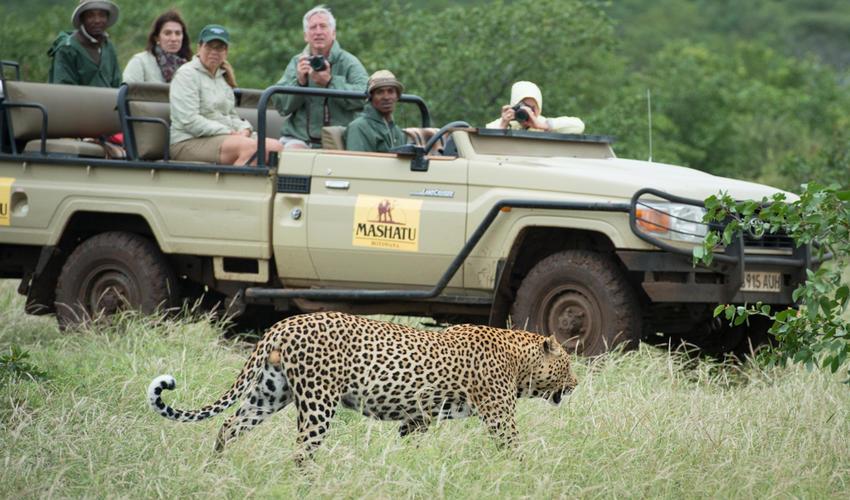 Mashatu Vehicle & Leopard