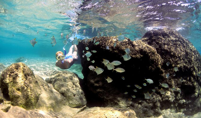 Wander down to the rocks infront of Thonga at low tide and explore the reefs and rock pools