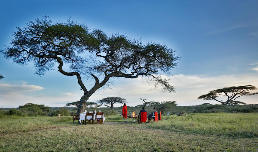 Enjoy a bush dinner under the skies, privately hosted affording you a truly unique eating experience under the skies