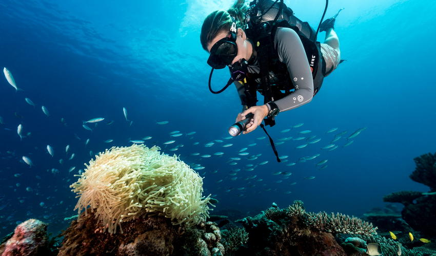 North Island's reefs offer a wealth of biodiversity to explore