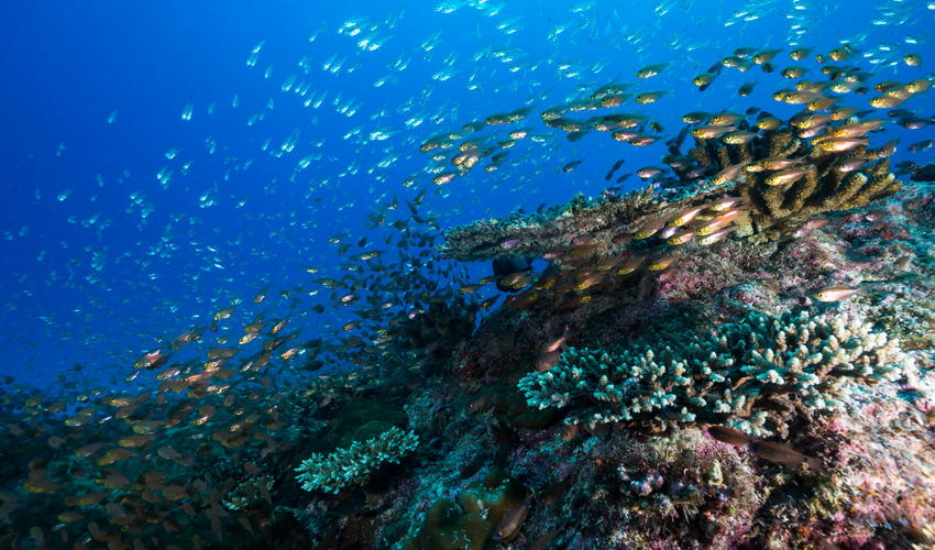 The profusion of marine life around the reefs can be breathtaking