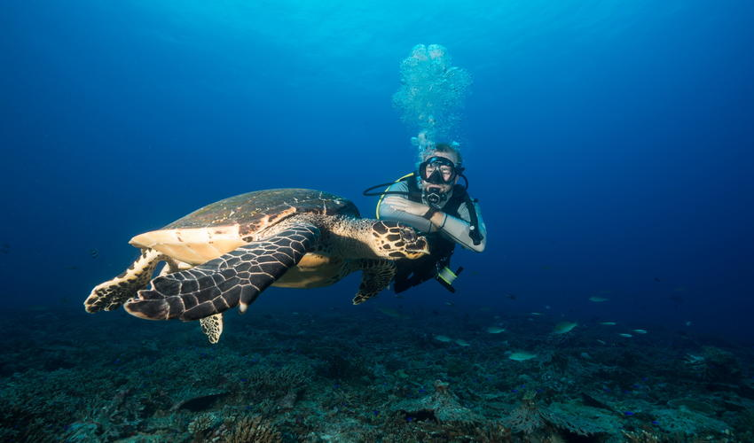 Scuba diver with curious sea turtle