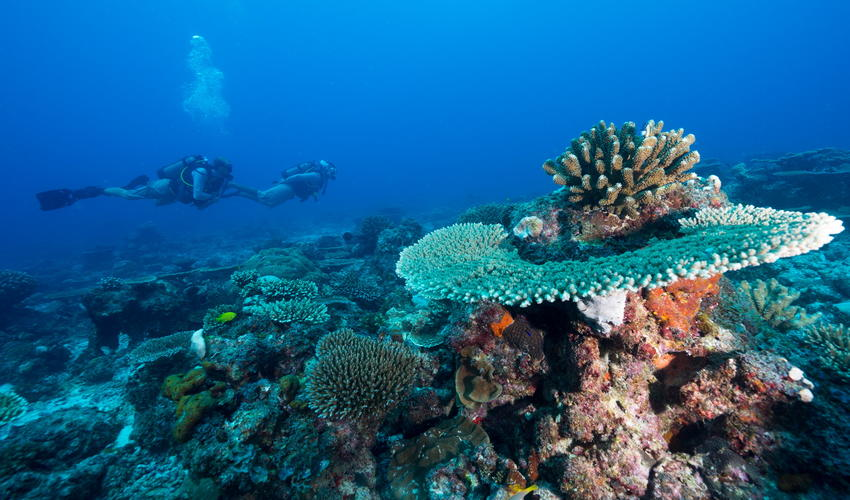 Distinctive reef formations can easily be reached from the Island