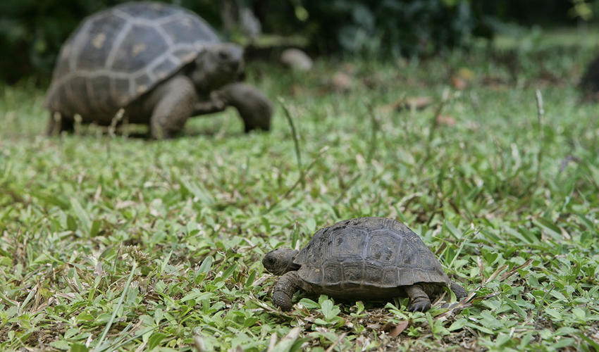 Even giant tortoises start out small!