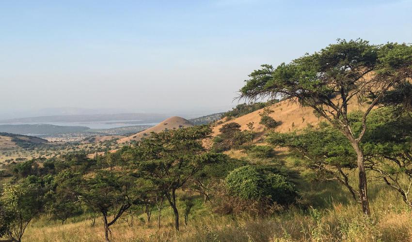 Landscape surrounding Magashi