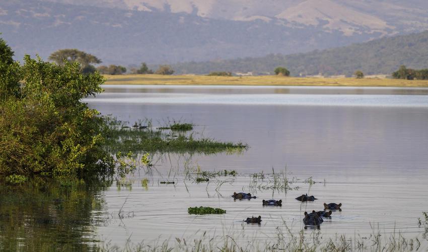 Lake Rwanyakazinga is home to numerous hippo