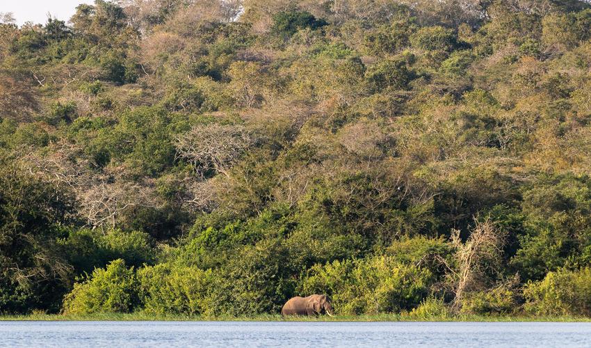 Game-viewing by boat on Lake Rwanyakazinga