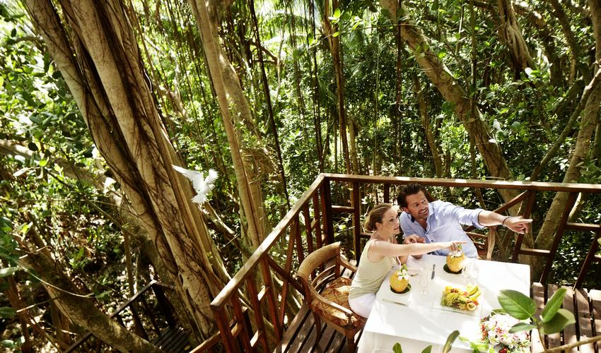Dining experience in the tree house