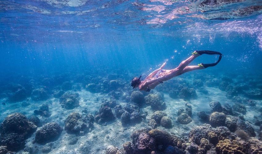 Snorkeling in the Quirimbas Archipelago