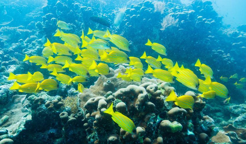 Diving in the Quirimbas Archipelago