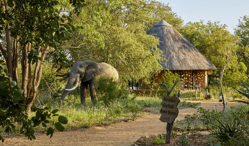 Motswari Private Game Reserve | Elephant