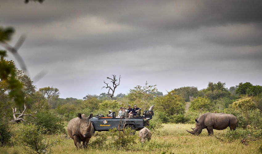 Motswari Private Game Reserve | Game Drives